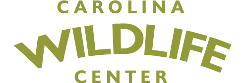 Carolina Wildlife Center